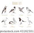 Birds set sketch.. 43162301