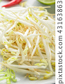 Bean sprouts in white plate. 43163863