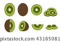 Set of fresh kiwi fruit  43165081