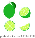 Fresh lime set isolated on white background vector 43165118