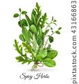 Fresh Herbs Realistic  43166863