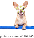 wellness beauty mask  spa  dog 43167545