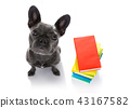 smart dog and books 43167582