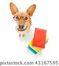 smart dog and books 43167595