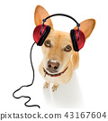 dog listening to music 43167604