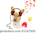 dog listening to music 43167605