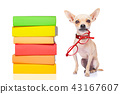 smart dog and books 43167607