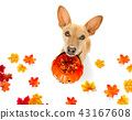 halloween  ghost  dog trick or treat 43167608