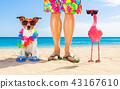 dog, owner, summer 43167610