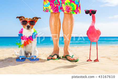 dog and owner on summer vacation 43167610
