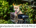 dog on a bike trailer or basket 43167612