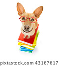 smart dog and books 43167617