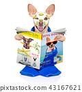 wellness beauty mask  spa  dog 43167621