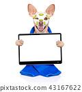 wellness beauty mask  spa  dog 43167622