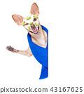 wellness beauty mask  spa  dog 43167625