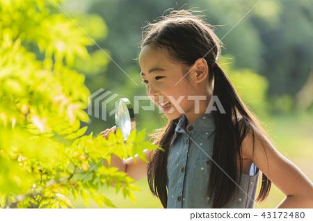 어린이,아이,여자아이,초등학생,여자,어린아이,관찰,돋보기,돋보기관찰,나뭇잎관찰,나뭇잎,보기 43172480