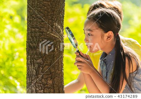 어린이,여자아이,어린아이,아이,여학생,관찰,돋보기,돋보기관찰,나무관찰,야외활동,야외학습 43174289