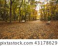 ใบไม้เปลี่ยนสีของสวนปราสาทโอซาก้าชมปราสาทโอซาก้าในฤดูใบไม้ร่วง 43178629