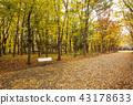 ใบไม้เปลี่ยนสีของสวนปราสาทโอซาก้าชมปราสาทโอซาก้าในฤดูใบไม้ร่วง 43178633