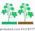 okra plant 43178777