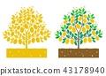 lemon tree 43178940