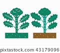 bloccoli plant 43179096