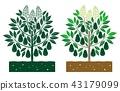 avocado tree 43179099