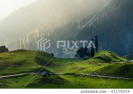 Beautiful farmland landscape in rural 43179354