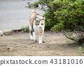 외부 고양이 43181016