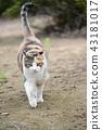 외부 고양이 43181017