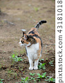 외부 고양이 43181018