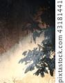 樹影 43181441