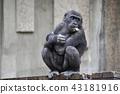 黑猩猩 動物 動物園 43181916