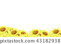 yellow Sunflower garden on the white background 43182938