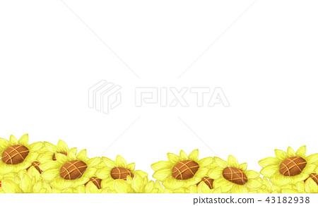 yellow Sunflower garden on the white background 43182938
