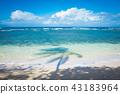 Shadow of palm tree 43183964