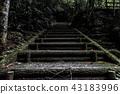 이끼, 계단, 숲 43183996