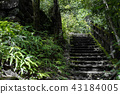 step, moss, canyon 43184005