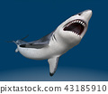 Great white shark 43185910