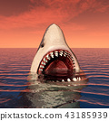 Great white shark 43185939