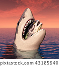 Great white shark with prey in its mouth 43185940