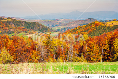 colorful fall foliage mixed forest 43188966