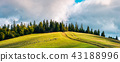 road, forest, scenery 43188996
