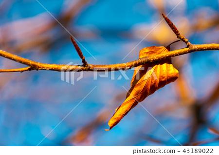 last foliage on the tree 43189022
