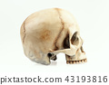 isolated human skull on a white background 43193816