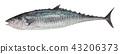 鱼 手绘 咸水鱼 43206373