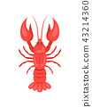 Red Crayfish Vector Illustration Isolated on White 43214360