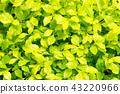 叶子植物 43220966