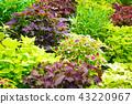 室内盆栽 观叶植物 绿色 43220967