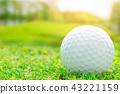 Golf ball on green course outdoor sport play 43221159